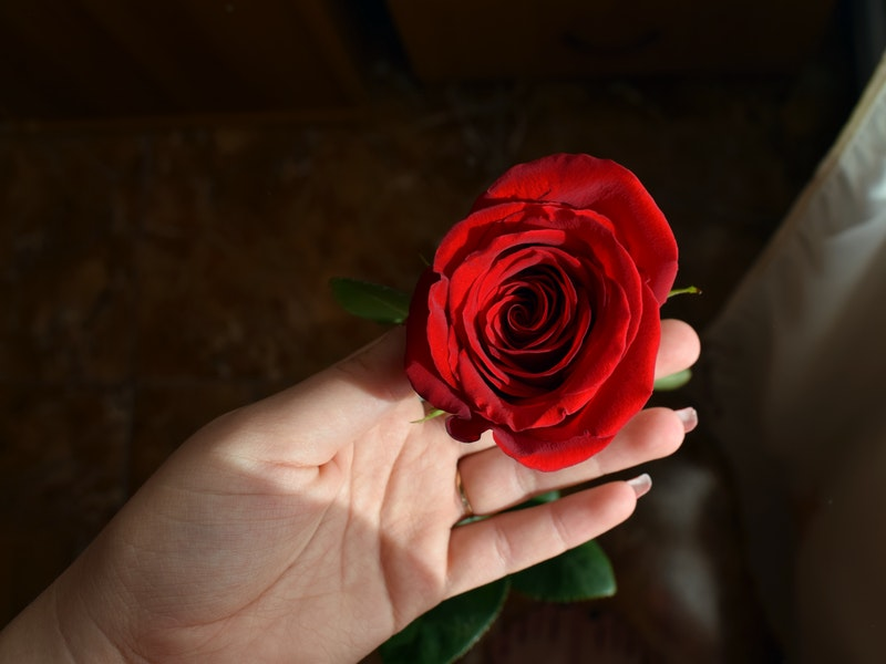 Jenis Mawar Tercantik Di Dunia Yang Wajib Kamu Ketahui Ehc Media